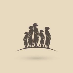 Erdmännchen Links